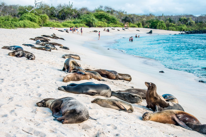 Sea lions resting under the sun, Galapagos