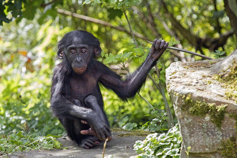 Die Sch 246 Nsten Tierschutzgebiete Der Welt Urlaubsguru De