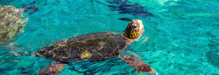Turtle Views around the Caribbean island of Curacao shutterstock_381223507-2