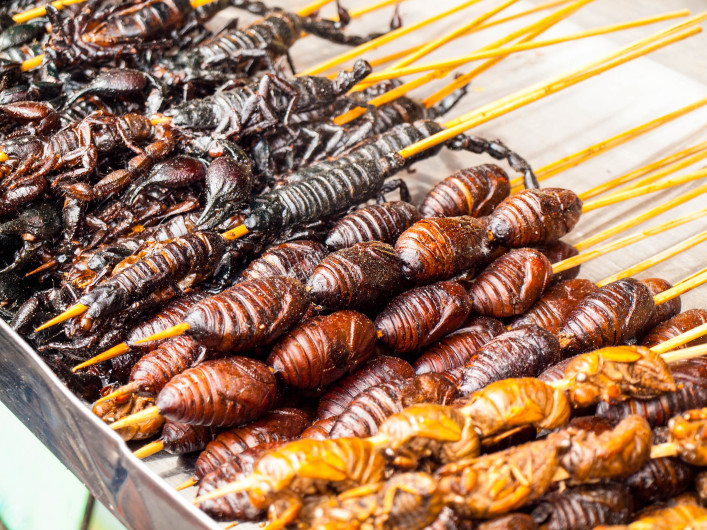 Roasted fried insects and bugs