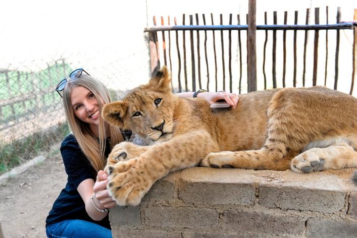 Johannesburg Tipps Löwen