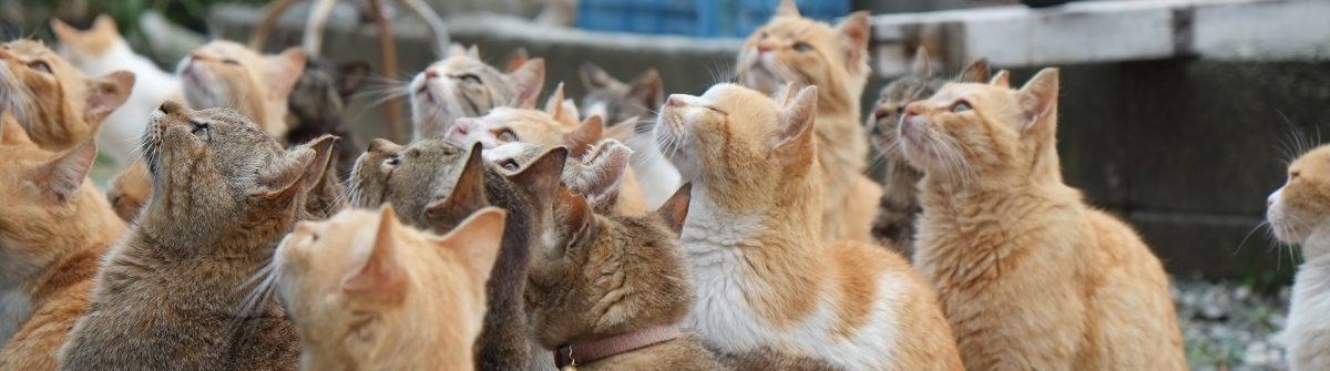 Katzeninsel in Japan