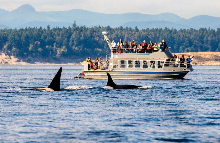 Whale Watching Tour  in B.C.