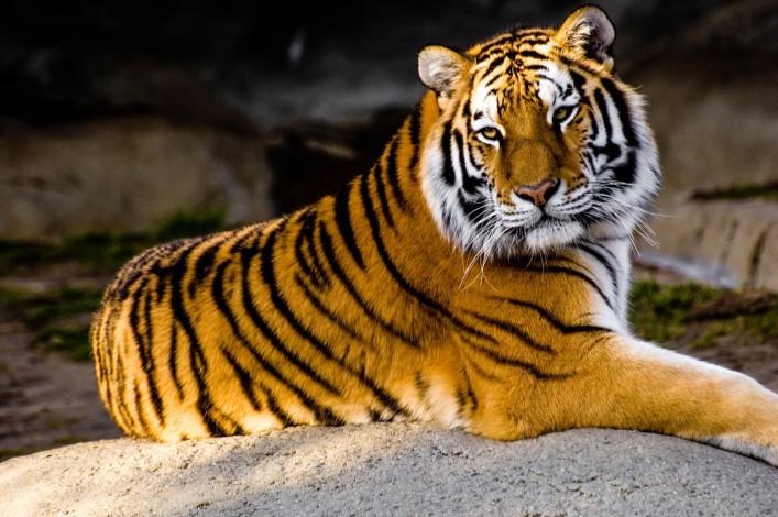 Zoos in Deutschland: Die 12 beliebtesten Zoos & Tierparks