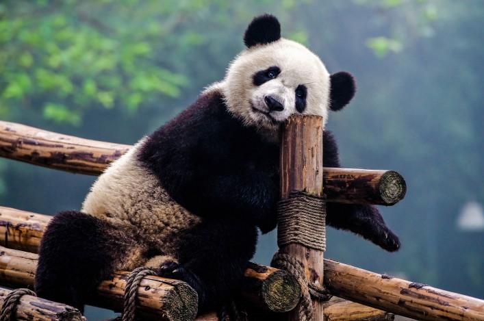 Die schönsten Zoos in Deutschland Köln