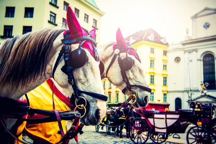 Wien Insidertipps Pferdekutsche