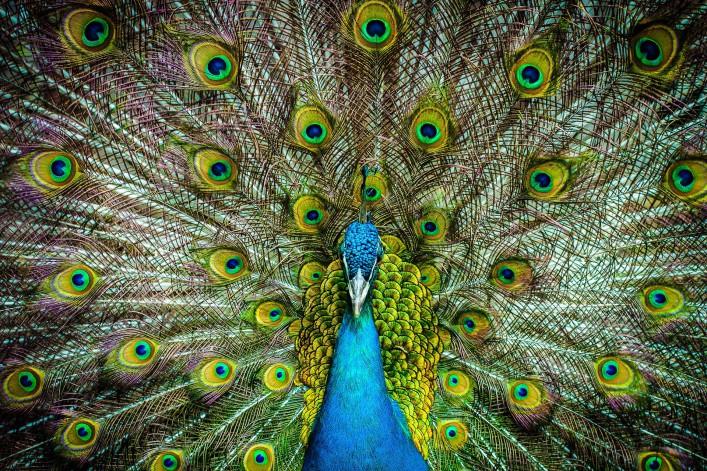 Die schönsten Zoos in Deutschland Nürnberg