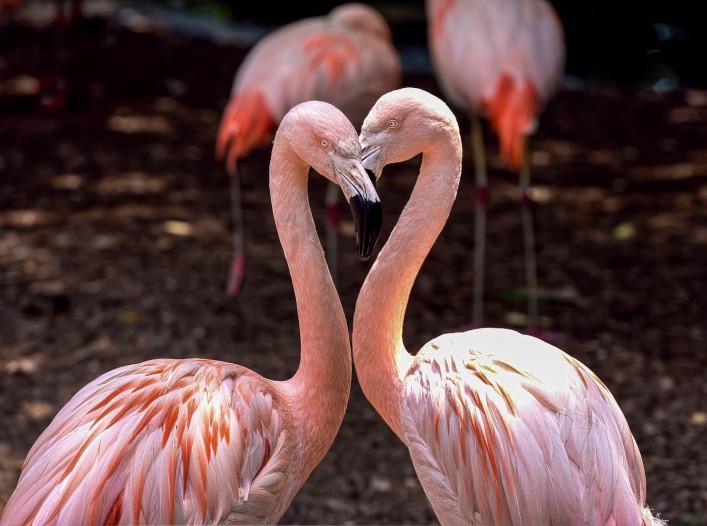 Die schönsten Zoos in Deutschland Stuttgart