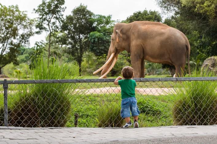 Die schönsten Zoos in Deutschland ZOOM