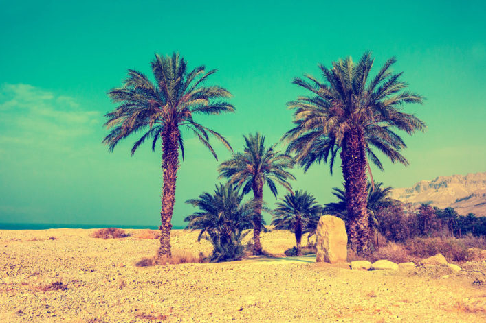 palm trees against sea in dessert