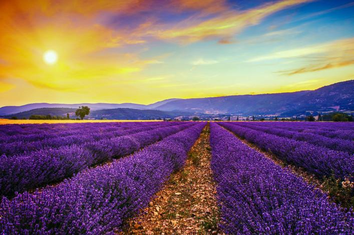malerische lavendelfelder in der provence