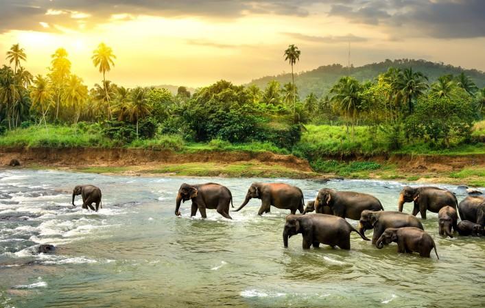 Sri Lanka Tipps Elefanten