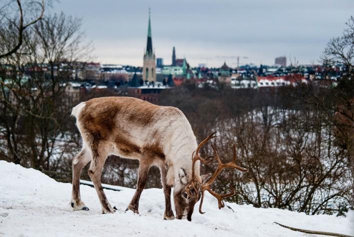 Stockholm Tipps Skansen
