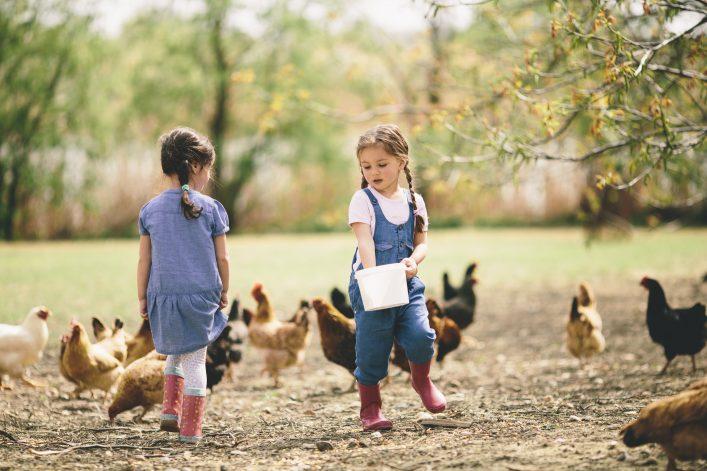 Urlaub auf dem Bauernhof Tiere füttern