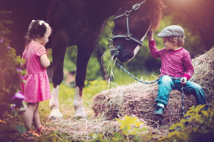 Urlaub auf dem Bauernhof Pferde