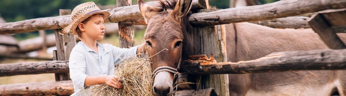 Urlaub auf dem Bauernhof Esel