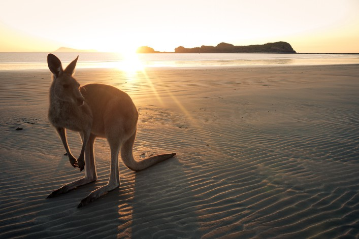 Good morning Australia