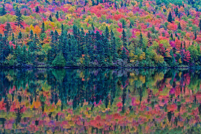 Colors of indian summer – Algonquin Provincial Park, Canada shutterstock_127894916-2