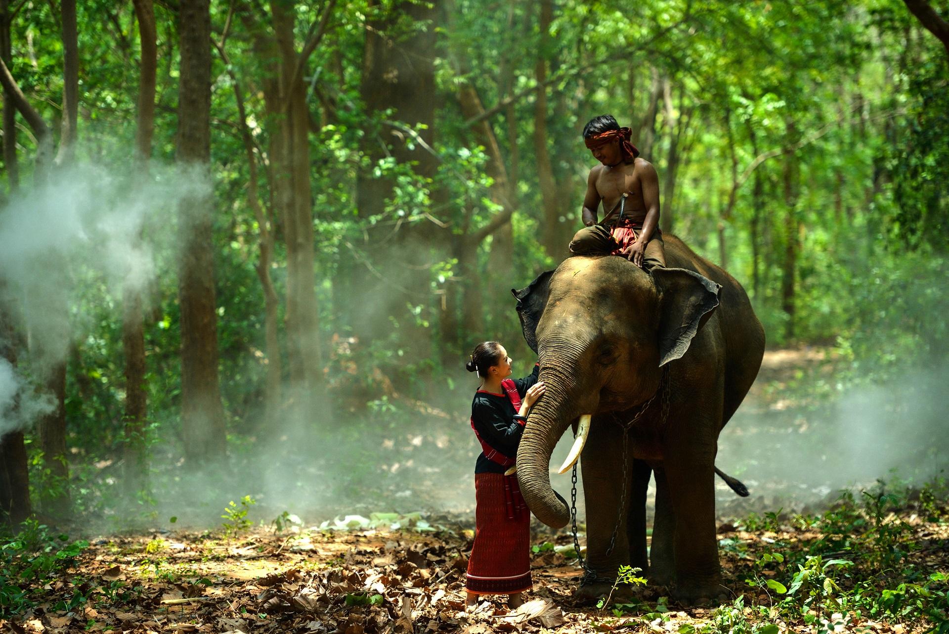 elefanten thailand