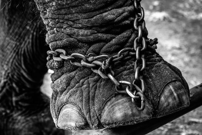 Elefantenreiten in Thailand