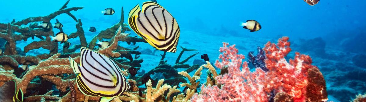 Unterwasserclub Malediven