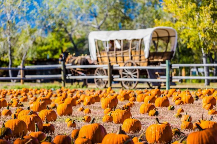 Halloween weltweit Tradition Kürbis