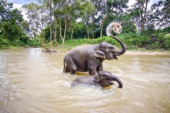 Elefantenreiten in Thailand Park