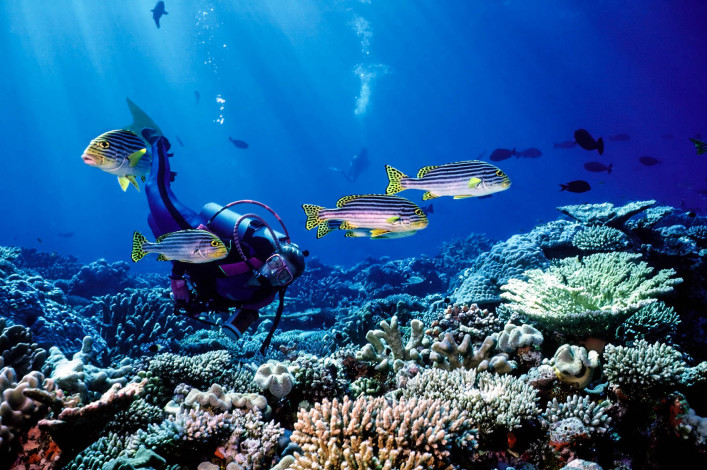 Woman Diver and South Pacific fish