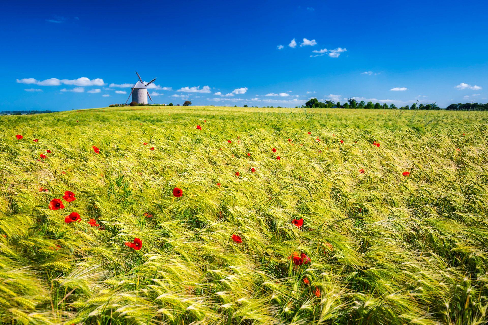 Normandie Landschaft