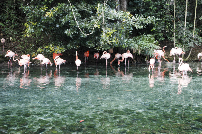Dominikanische Republik Flamingos