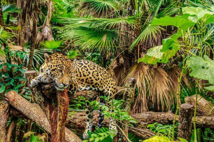 Belize Tiere