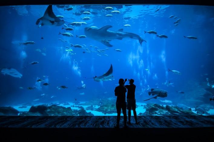 Unterwasserhotels Fische