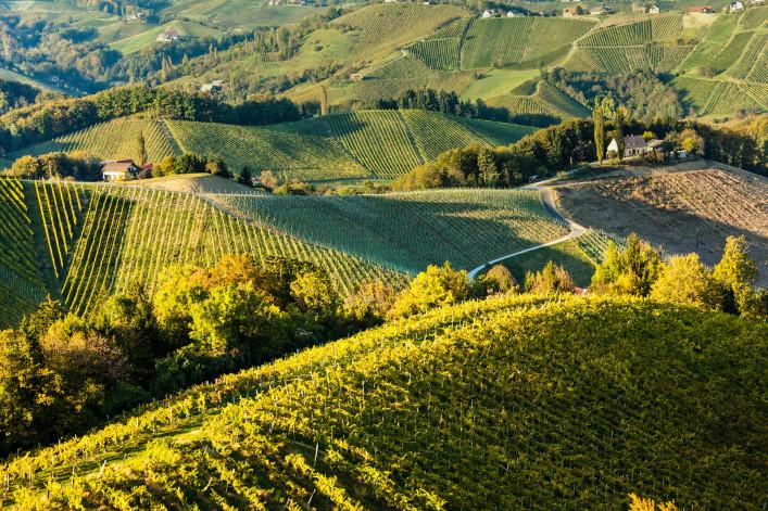 Wine Yard iStock_000020928713_Large-2