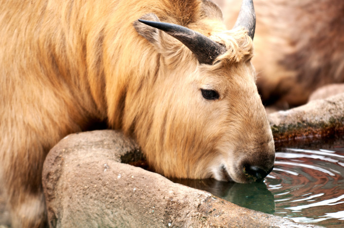 Phallussymbole Buthan