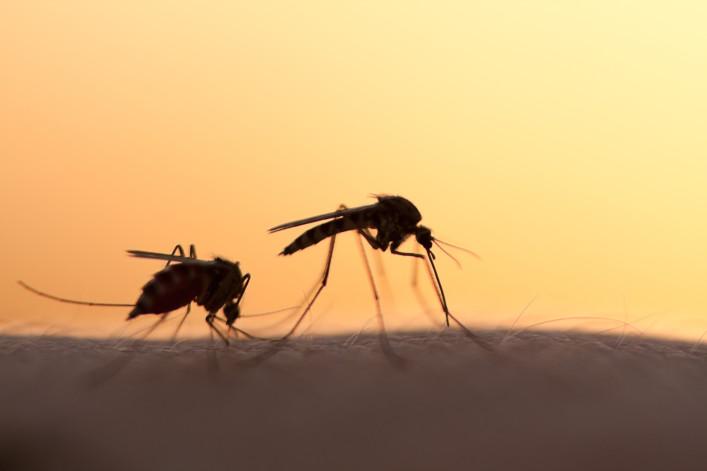 Mosquitos shutterstock_257567473