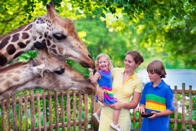 shutterstock_254980465 safari