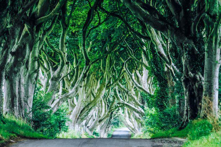 Unglaubliche Orte Dark Hedges Nordirland
