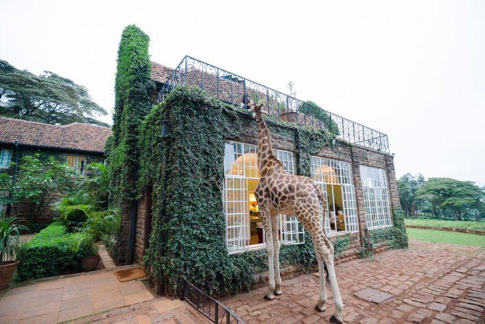 Giraffe Manor Kenia, Nairobi