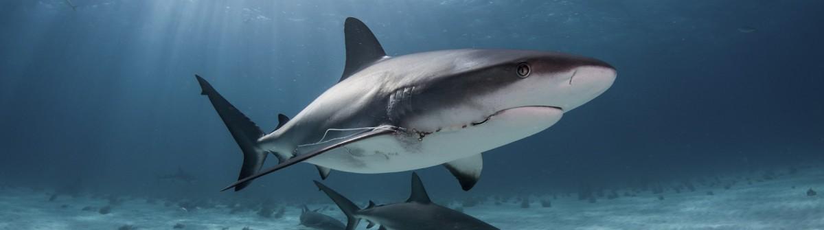 Gewinnt eine Nacht im Haifischbecken über Airbnb
