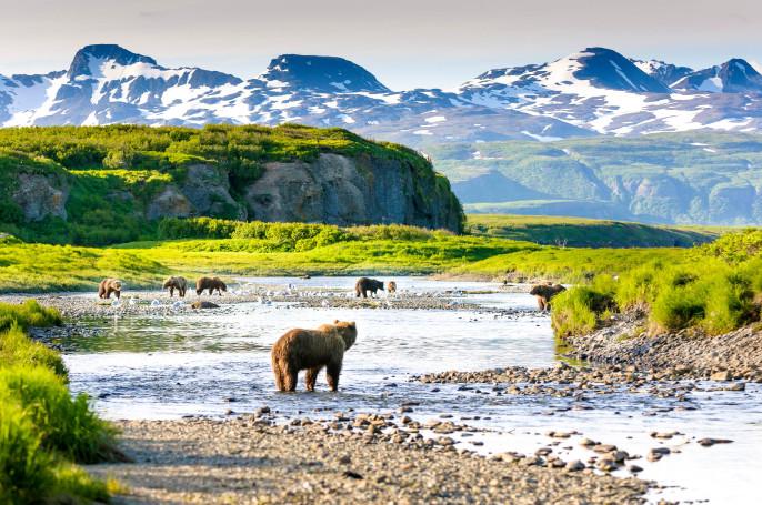 Group of Alaska Brown Bears Fishing Salmon at McNeil River USA iStock_000080063939_Large-2