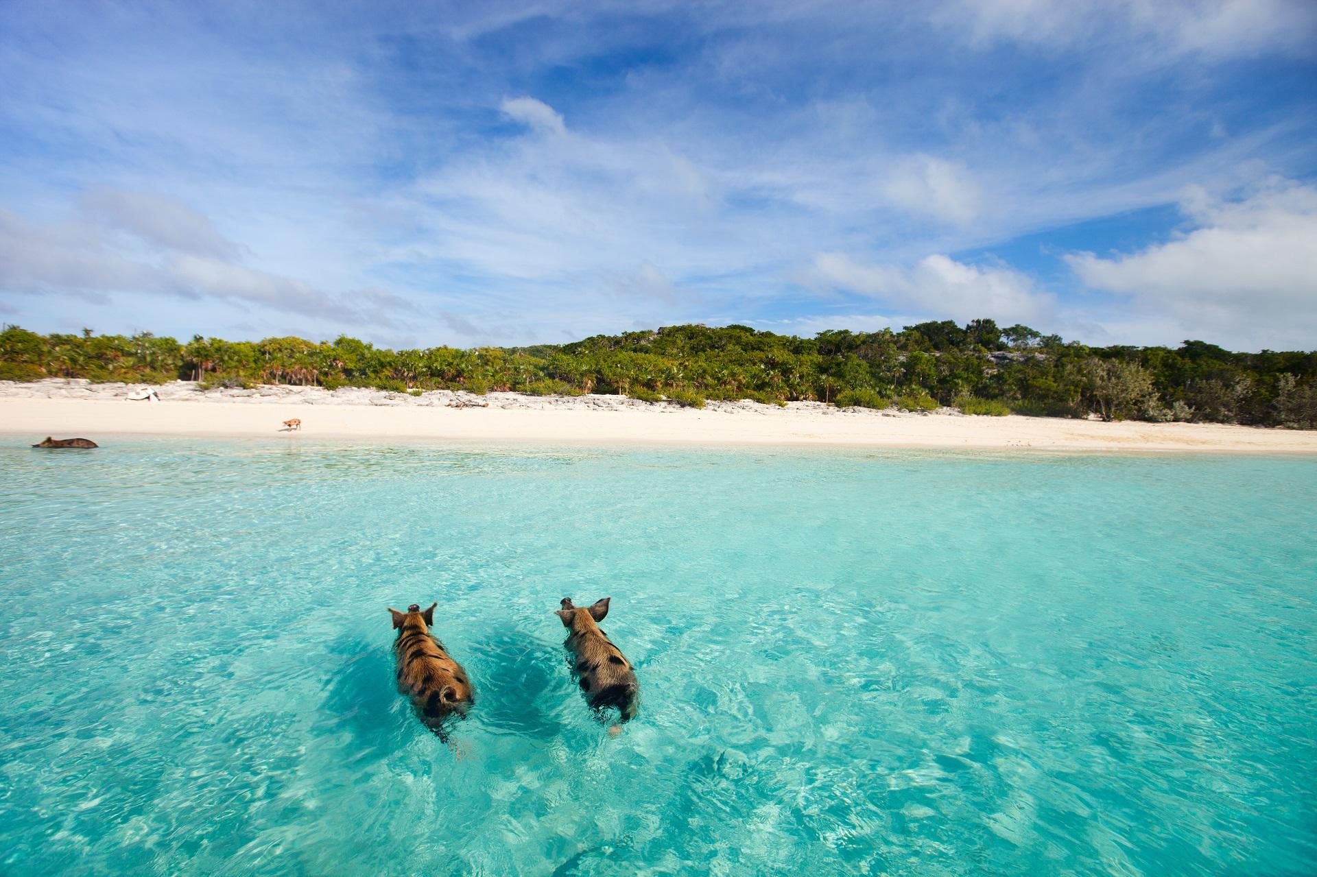 Schwimmen mit den schweinen Top 5 most beautiful islands in the world