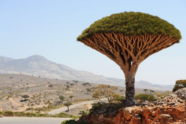 Unglaubliche Orte Drachenbäume, Jemen