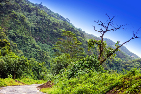 Tahiti. The road in mountains. Tropical nature.