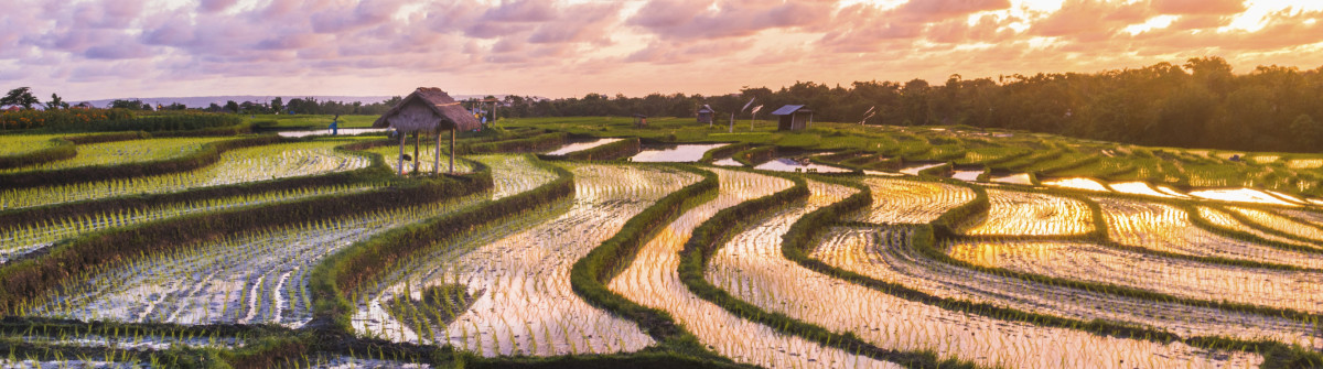Bali Rice Fields Sunset iStock_000055009954_Large