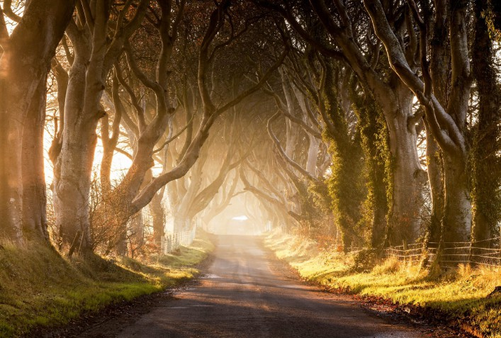Dark Hedges III Northern Ireland iStock_000045165038_Large-2