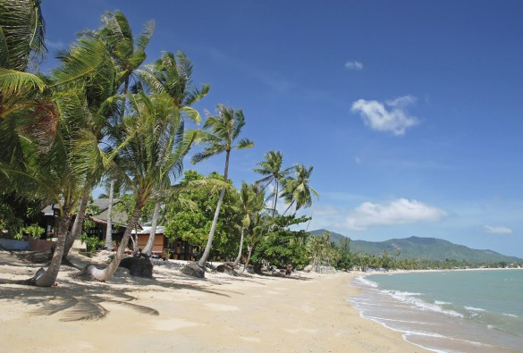 Palms on the beach, Ko Samui, Thailand iStock_000022017556_Medium