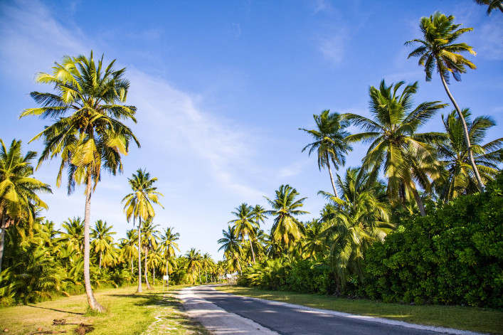 Coconut Palm Trees Cocos Islands Keeling Islands iStock_000011348634_Large-2