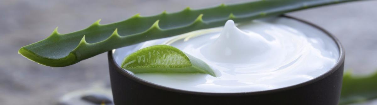 Tipps gegen Sonnenbrnd Aloe Vera
