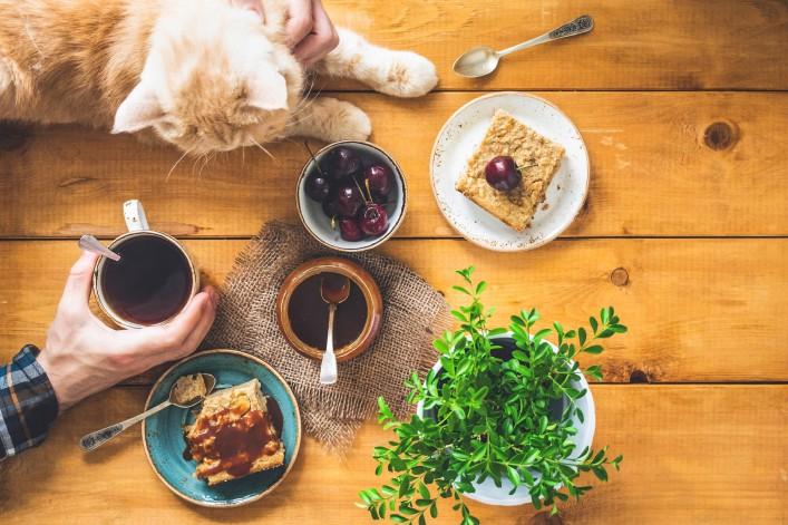 Katzencafés weltweit Frühstück Katze
