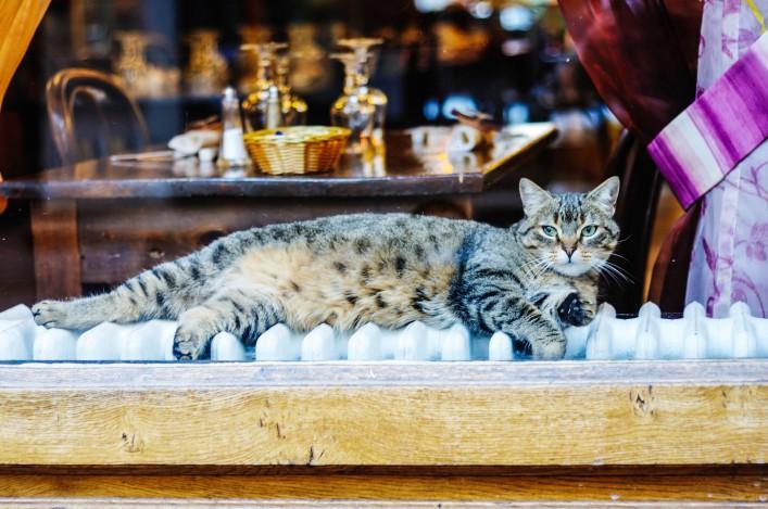 Katze im Restaurant